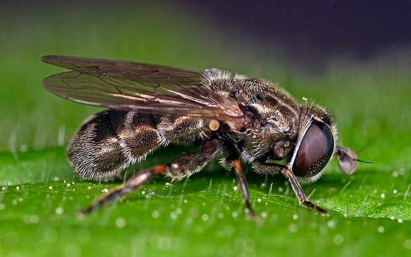 Как бороться с луковой мухой, согласно современным и народным методам обработки